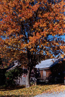 Fall Sugar Shack - Photo by Pam Nelligan